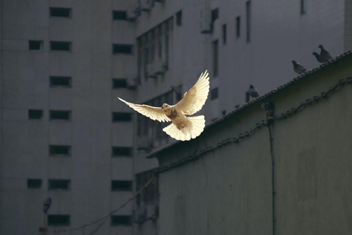 what-godly-peace-looks-like